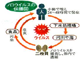 ノロウイルスの伝播.png